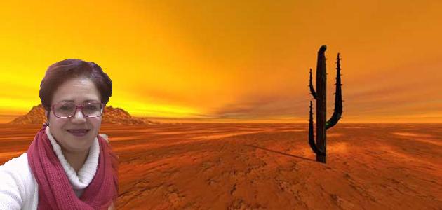 صحراء-التيماء