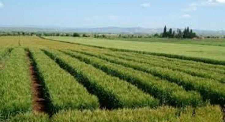الدولة تسترجع 4 هكتارات من أراضيها المستولى عليها في منوبة-التيماء