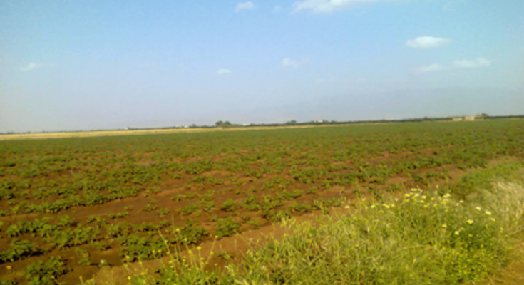 الدولة تسترد 291 هكتارا من أراضيها المستولى عليها في باجة -التيماء